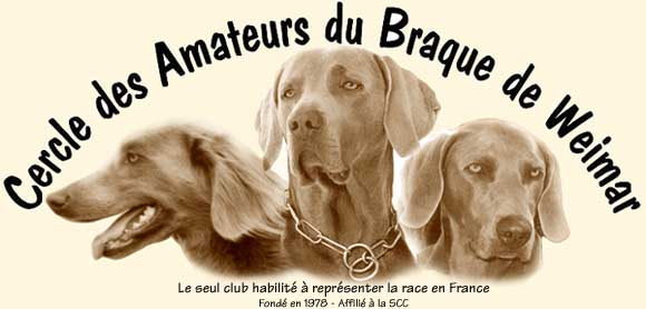 club de race braque de weimar